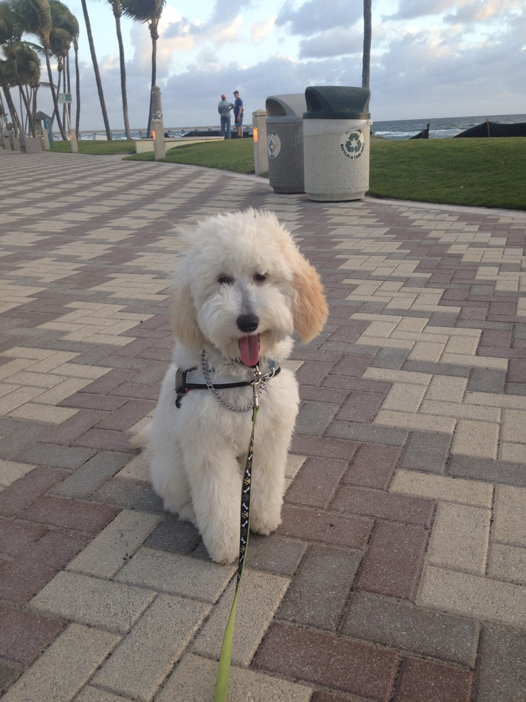 Daisy just loves the beach!