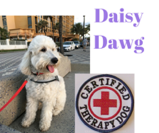 daisy-dawg-certified-therapy-dog
